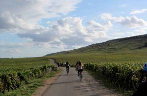 balade dans les vignes en groupe à vélo
