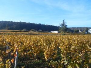 Côte viticole