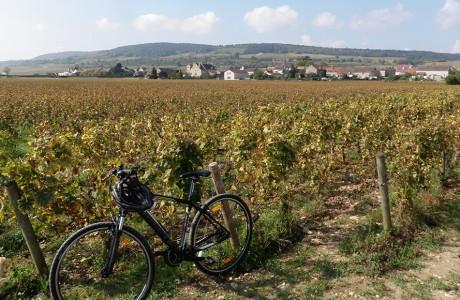 balade-oenologique-Bourgogne-Côte-de-Nuits