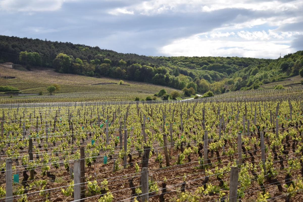 Balade-oenologique-Cote-de-Nuits-Bourgogne-Gevrey-Chambertin-Velovitamine-2017-(41)