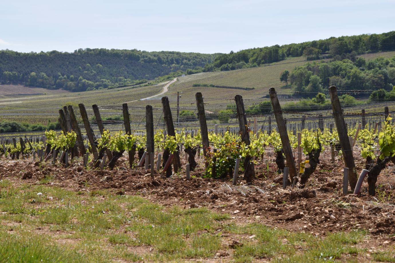Vélo, vin, Dégustation Vignoble de Bourgogne, Parcelles des Echezeaux