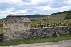 Balade oenologique Cote de Nuits Bourgogne Velovitamine 2017 (40)