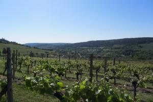 dégustations vins de Bourgogne